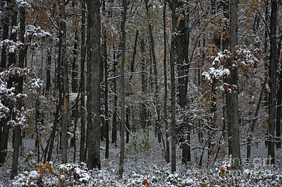 Photograph - Stand Of Trees by Debra Fedchin