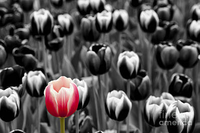 Stand Out From The Crowd... Art Print