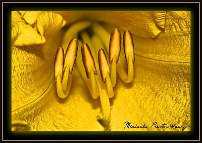 Flower Photograph - Stand Up by Michaela Preston