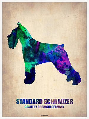 Colorful Dog Wall Art - Painting - Standard Schnauzer Poster by Naxart Studio