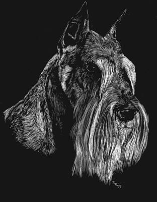Drawing - Standard Schnauzer by Rachel Hames