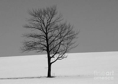 Photograph - Standing Alone by Margaret Hamilton