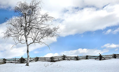 Split Rail Fence Photograph - Standing Alone by Todd Hostetter