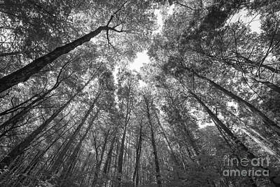 Standing Among Giants Bw Original by Michael Ver Sprill