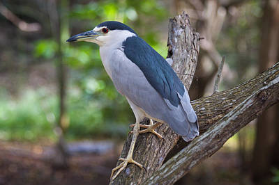 Animal Photograph - Standing Bird by Genaro Rojas