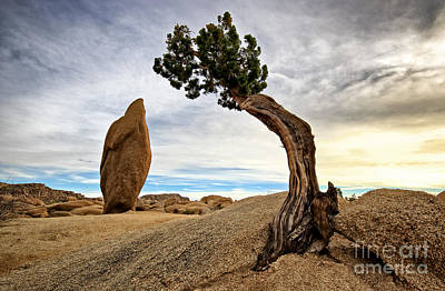 Photograph - Standing Cypress Tree And Rock by Charline Xia