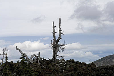 Mckenzie Pass Photograph - Standing Dead On The Mckenzie Pass 2 by Eric Mace