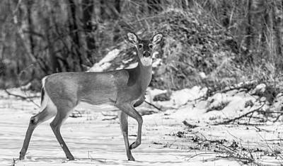 Photograph - Standing Doe by Jahred Allen