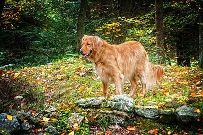 Photograph - Standing Golden by Darlene Bell