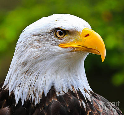 Photograph - Standing Guard by John Roberts