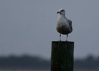 Photograph - Standing Guard by Paula Tohline Calhoun
