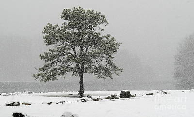 Art Print featuring the photograph Standing In A Snow Storm by Brenda Bostic