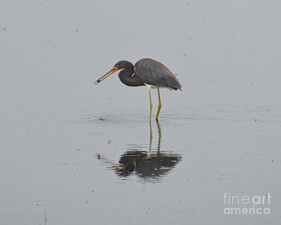 Photograph - Standing In The Rain by Carol  Bradley