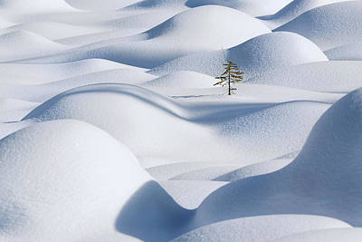 Lonely Tree Photograph - Standing In The Waves by Victor Liu