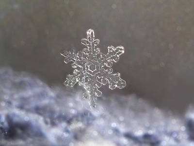 Art Print featuring the photograph Standing Snowflake by Lorella  Schoales