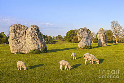 Standing Stones And Sheep Avebury Print by Colin and Linda McKie