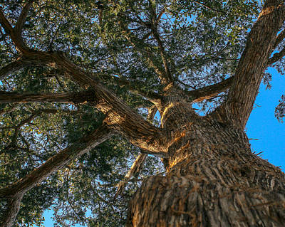 Photograph - Standing Tall by Jeff Mize