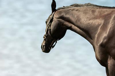 Horses Photograph - Standing Tall by Jillian  Chilson