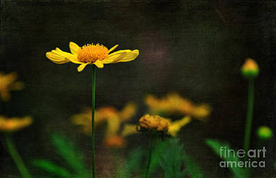 1-war Is Hell Royalty Free Images - Standing Tall Royalty-Free Image by Kaye Menner