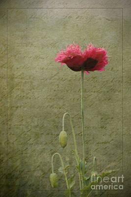 Photograph - Standing Tall by Liz  Alderdice