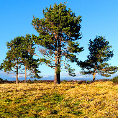 Photograph - Standing Tall On The Fields Of Culloden by Mark E Tisdale