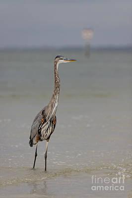 Photograph - Standing Tall by Rick Kuperberg Sr