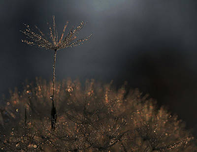 Dew Photograph - Standing Toward The Light... by Thierry Dufour