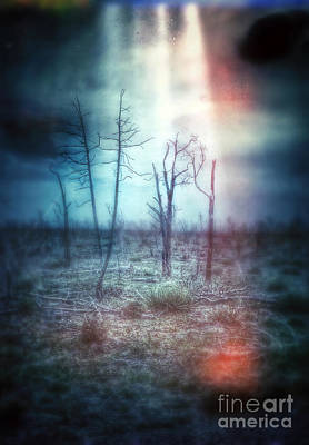 Abduction Photograph - Stange Lights From The Sky by Jill Battaglia