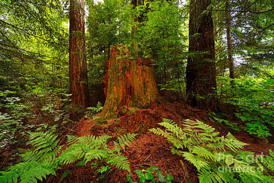 Trees Photograph - Stanley Park Greenery by Terry Elniski
