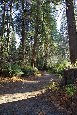 Photograph - Stanley Park Trail by Marilyn Wilson