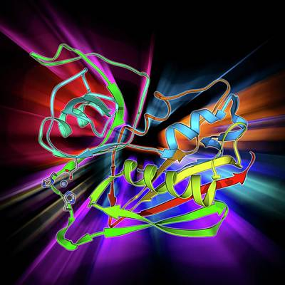 C2 Photograph - Staphylococcal Enterotoxin C2 Molecule by Laguna Design