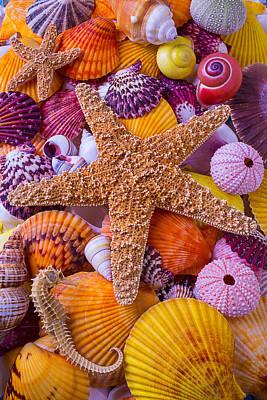 Star Among Sea Shells Art Print