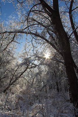 Rowing - Star Bright Snow by Tony Hake