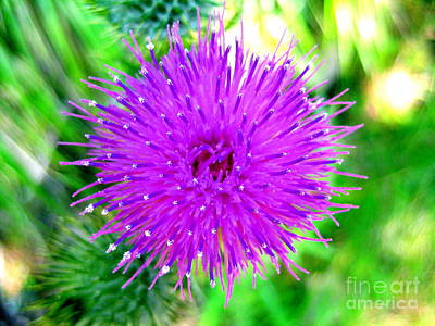 Art Print featuring the photograph Star Burst by Kathy Bassett