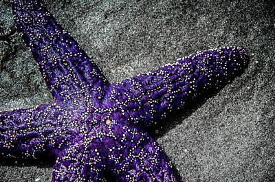 Photograph - Star Close by Roxy Hurtubise