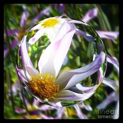 Photograph - Star Dahlia Flower Globe  by Susan Garren