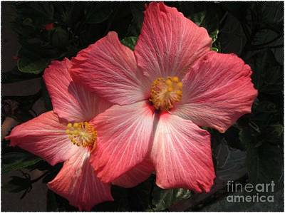 Art Print featuring the photograph Star Flower by Barbara Griffin