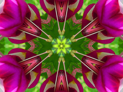 Digital Art - Star Fuchsia 1 Mandala by Diane Lynn Hix