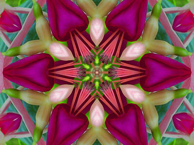 Digital Art - Star Fuchsia 2 Mandala by Diane Lynn Hix