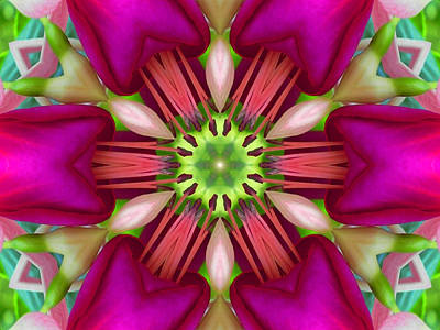 Digital Art - Star Fuchsia 3 Mandala by Diane Lynn Hix