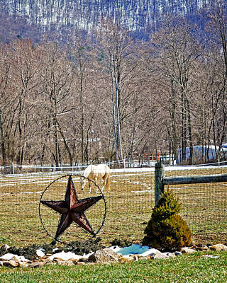 Photograph - Star Grazing  by Cathy Shiflett
