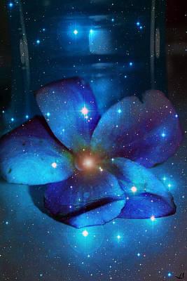 Photograph - Star Light Plumeria by Linda Sannuti