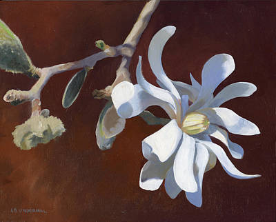 Painting - Star Magnolia by Alecia Underhill