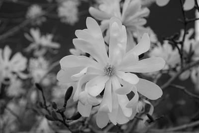 Star Magnolia Monochrome Art Print by Priyanka Ravi