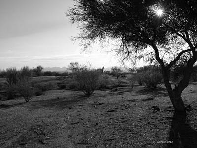 Photograph - Star Of The Desert by Dick Botkin