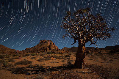 Star Trails Above A Quiver Tree Art Print by Robert Postma