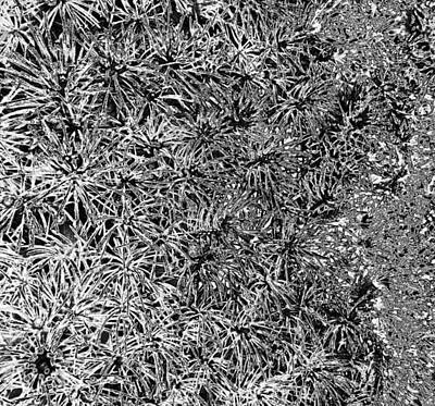 Photograph - Starburst Abstract In Bw by Seth Shotwell