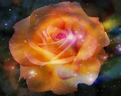 Photograph - Stardust Rose by Marilyn Wilson
