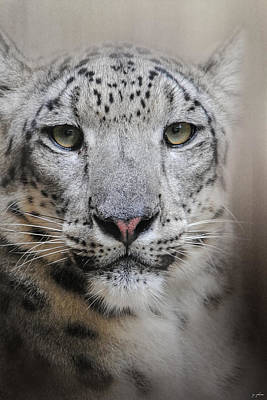 Photograph - Stare Of The Snow Leopard by Jai Johnson