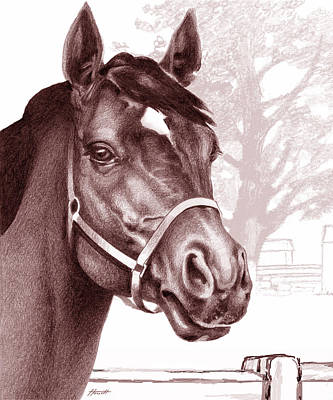 Drawing - Stare Of The Stallion by Patricia Howitt